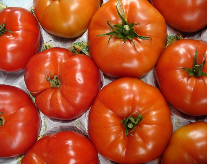 500 BEEFSTEAK TOMATO Lycopersicon Lycopersicum Fruit Vegetable Seeds