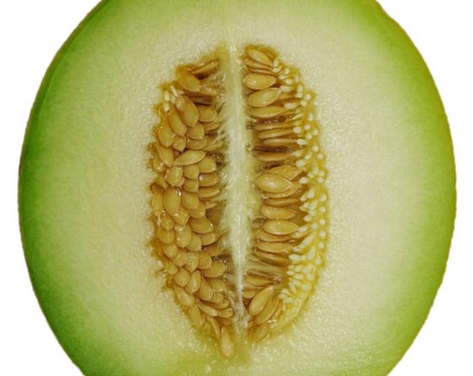 75 Green Flesh ROCKY FORD CANTALOUPE Muskmelon Cucumis Melo Melon Fruit Seeds