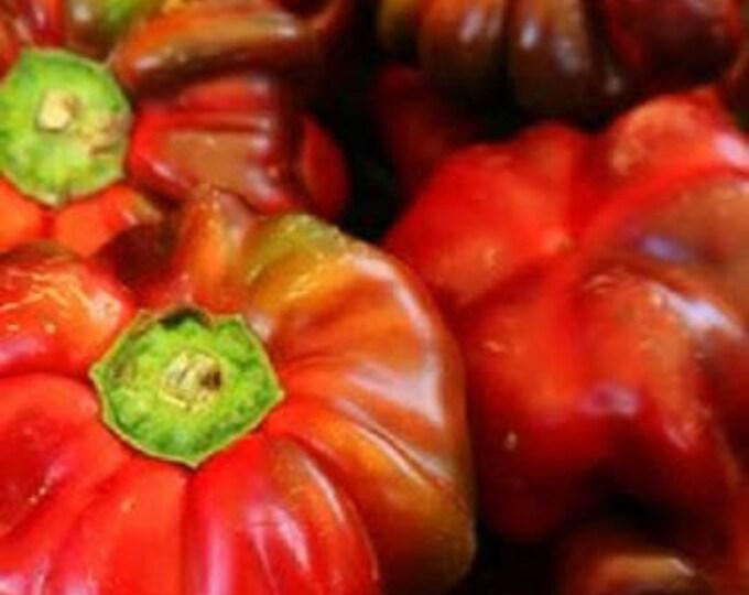 100 PIMENTO PEPPER (Red Sweet Pimientio / Italianelle / Cheese, Roasting, Frying Pepper) Capiscum Annuum