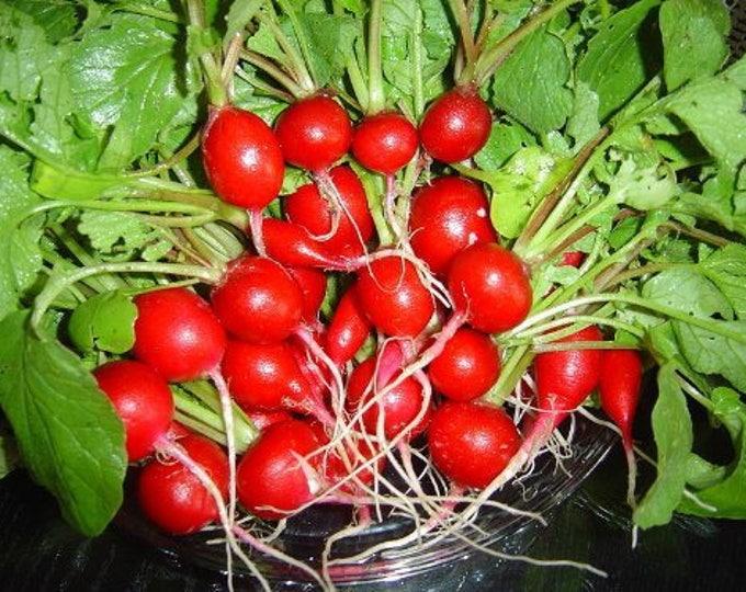 2000 CHERRY BELLE RADISH Raphanus Sativus Vegetable Seeds