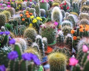 50 CACTUS MIX 'Finest Mixed' Succulent Flower Plant Seeds