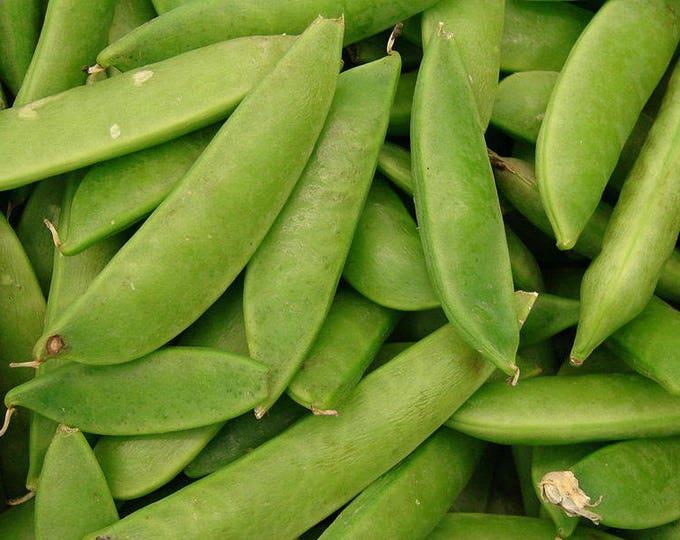 50 Mammoth MELTING SUGAR PEA Stringless Snow Pea Pisum Sativum Vegetable Seeds