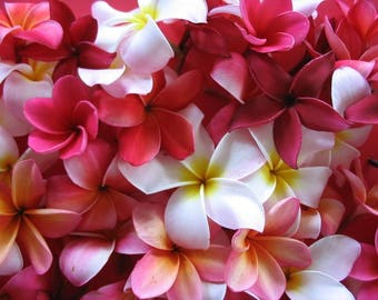 10 MIXED COLORS PLUMERIA Seeds - Lei Flower Frangipani Mix Fragrant Shrub Small Tree Pink Red Yellow White Peach Two Tone *Flat Shipping