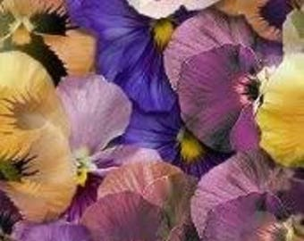 250 Mixed Colors SWISS GIANT PANSY Viola Wittrockiana Flower Seeds