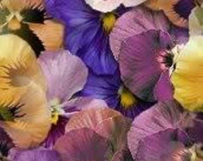 1000 Bulk  Mixed Swiss Giant Pansy Seeds Viola wittrockiana Heirloom 2.83 grams