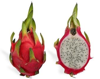 20 WHITE DRAGON FRUIT (Pitaya / Pitahaya / Strawberry Pear) Hylocereus Undatus Cactus Seeds