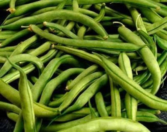 40 GREEN BEAN PROVIDER Phaseolus Vulgaris Vegetable Seeds