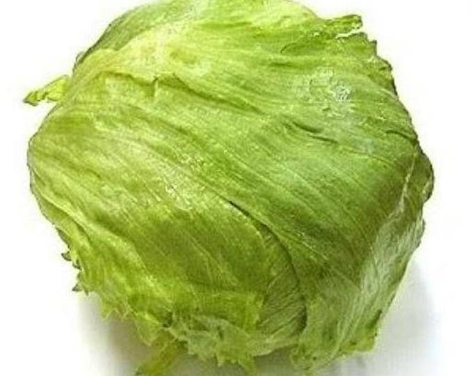 3000 ICEBERG HEAD LETTUCE Lactuca Sativa Vegetable Seeds