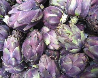 50 PURPLE ROMAGNA ARTICHOKE Italian Cynara Scolymus Flower Vegetable Seeds