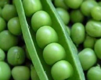50 Super SUGAR SNAP PEA Pisum Sativum Macrocarpon Vegetable Seeds