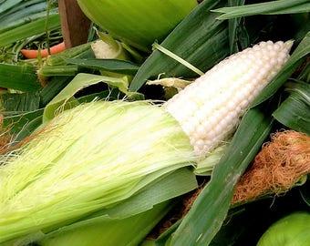 100 Country GENTLEMAN WHITE CORN Sweet Heirloom Zea Mays Vegetable Seeds