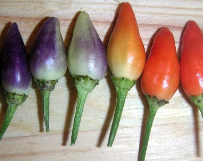 25 BOLIVIAN RAINBOW PEPPER Multi Colored Chili Capsicum Annuum Vegetable Seeds