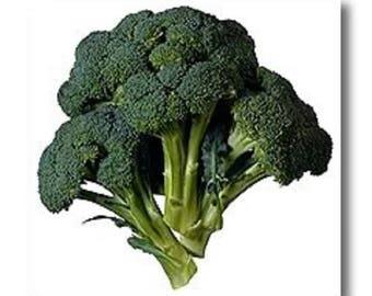 1000 EARLY Fall RAPINI BROCCOLI (Broccoli Raab / Broccoli Rabe / Brocoletti / Cima di Rapa) Brassica Ruvo Vegetable Seeds
