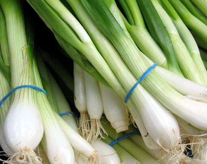 500 SOUTHPORT White Globe BUNCHING ONION Allium Cepa Vegetable Seeds