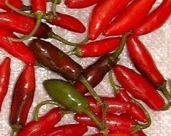 200 Hot SERRANO TAMPIQUENO PEPPER Mexican Chile Capsicum Annuum Vegetable Seeds