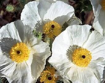 White Desert Flower Etsy
