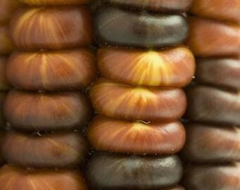 15 Bronze GLASS GEM CORN Ornamental Gold Copper Edible Zea Mays Vegetable Seeds