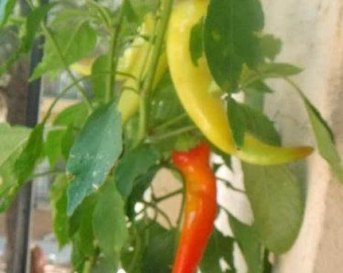 250 SWEET BANANA PEPPER Capsicum Annuum Vegetable Seeds