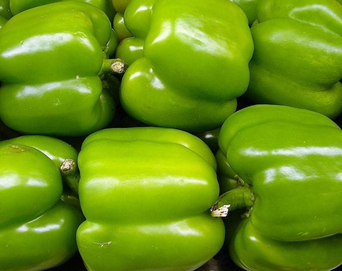 200 BIG GREEN Bell PEPPER Sweet Capsicum Annuum Vegetable Seeds