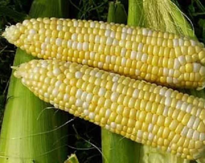 60 BICOLOR CORN DELECTABLE Yellow & White Zea Mays Vegetable Seeds