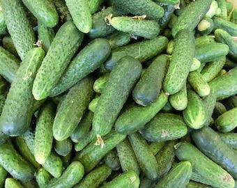 150 BOSTON PICKLING CUCUMBER Heirloom Cucumis Sativus Fruit Vegetable Seeds