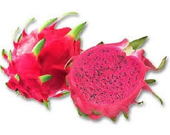 20 PURPLE DRAGON FRUIT (Pitaya / Pitahaya / Strawberry Pear) Hylocereus Undatus Cactus Seeds
