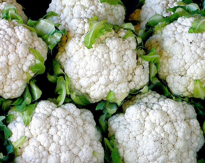 250 SNOWBALL SELFBLANCHING CAULIFLOWER White Brassica Oleracea Vegetable Seeds