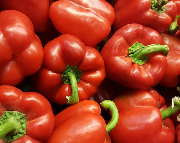 150 BIG RED Bell PEPPER Sweet Capsicum Annuum Vegetable Seeds *Comb Ship