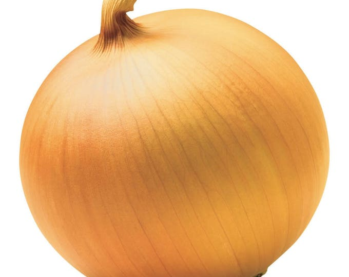 500 Riverside Sweet YELLOW SPANISH ONION Allium Cepa Vegetable Seeds