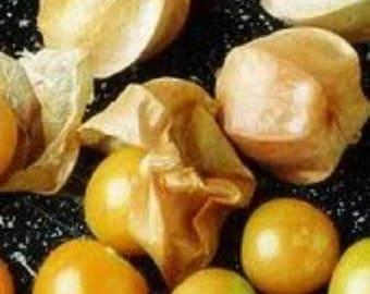 200 Organic GROUND CHERRY Physalis Pruinosa ( Golden Strawberry / Chinese Lantern ) Vegetable Seeds *Comb S/H