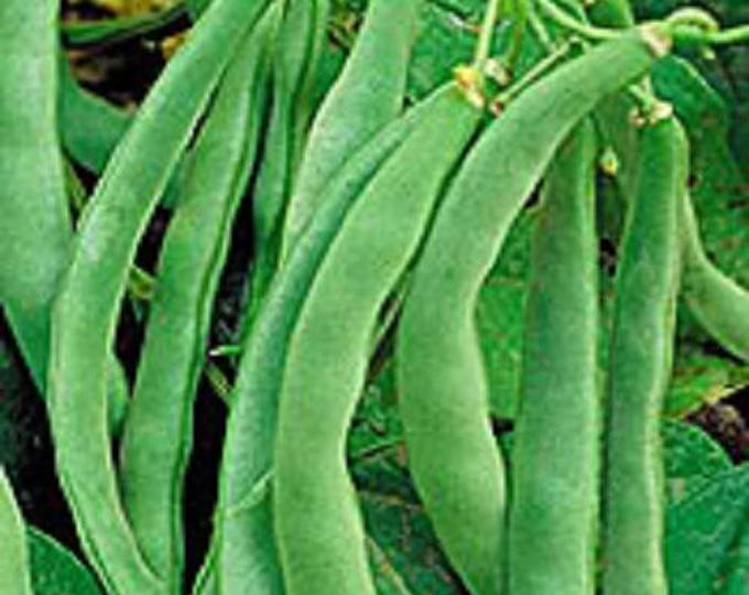 50 NAVY BEAN Michigan Pea White Phaseolus Vulgaris Soup Vegetable Seeds
