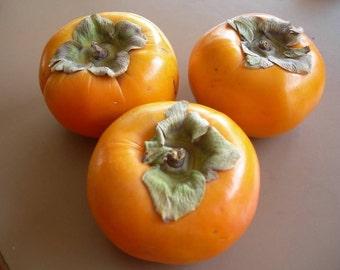 5 PERSIMMON TREE Diospyros Virginiana Fruit Seeds