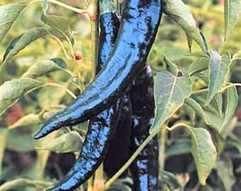 50 PASILLA BAJIO PEPPER Mexican Chile Negro Capsicum Annuum Vegetable Seeds