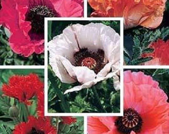1000 MIXED Colors ORIENTAL POPPY Papaver Orientale Flower Seeds