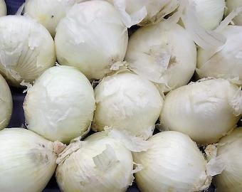 500 Sweet WHITE SPANISH ONION Allium Cepa Vegetable Seeds