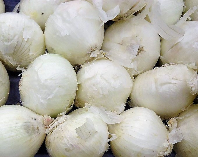 500 Sweet WHITE SPANISH ONION Allium Cepa Vegetable Seeds