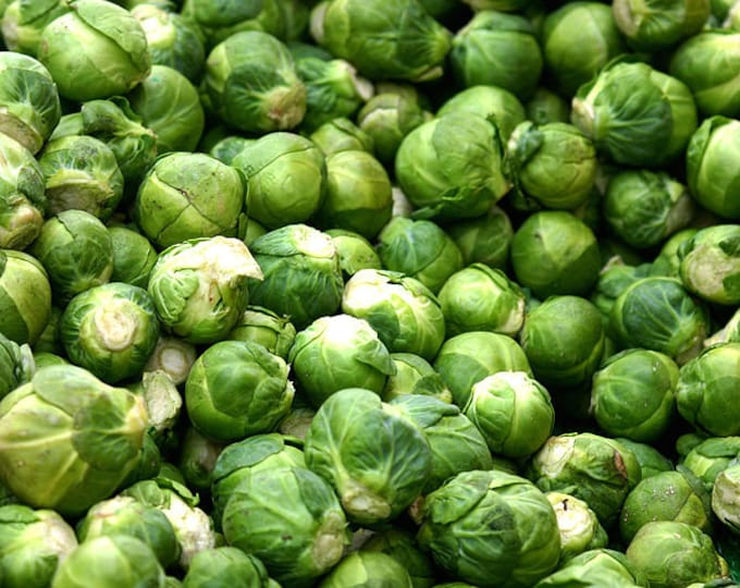 500 HEIRLOOM BRUSSEL SPROUT Brassica Oleracea Green Long Island Vegetable Seeds *Flat Shipping
