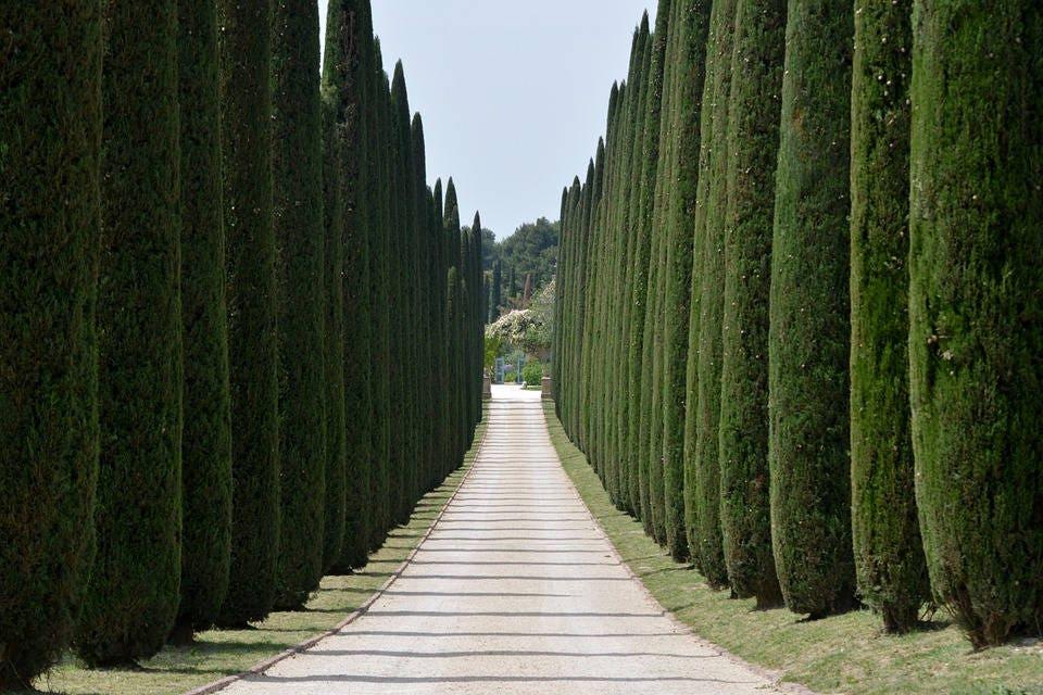 Cosa Fare I Giardini Di Costanza Raccolta Di Giardino Idea