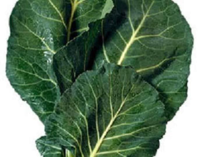 1500 MORRIS HEADING COLLARDS Collard Green Brassica Oleracea Vegetable Seeds