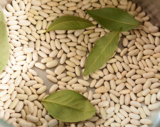 30 CANNELLINI BEAN Seeds White Italian Kidney Phaseolus Vulgaris Vegetable Seeds