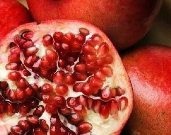25 POMEGRANATE TREE Punica Granatum Red Fruit Seeds
