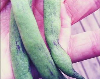 50 RATTLESNAKE POLE BEAN Stringless Purple Phaseolus Vulgaris Vegetable Seeds