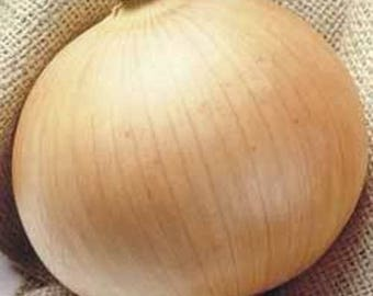 250 Sweet WALLA WALLA ONION Allium Cepa Vegetable Seeds