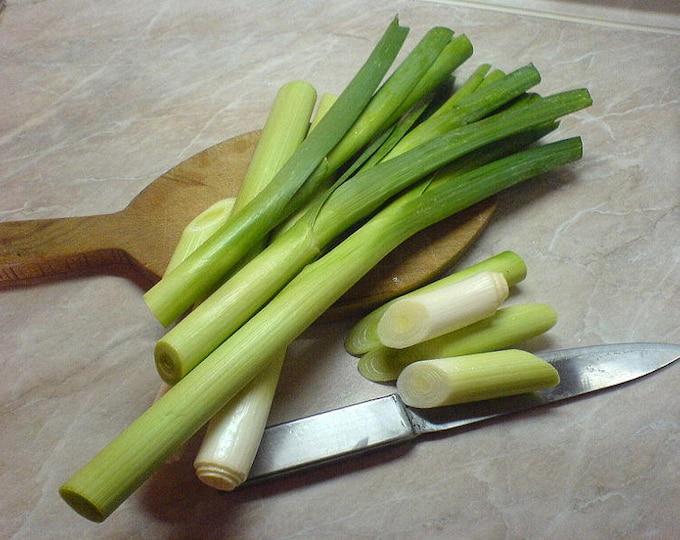 500 BROAD LONDON LEEK Allium Porrum Heirloom White & Green Vegetable Seeds