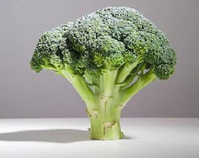 1000 Organic DE CICCO BROCCOLI Di Cicco Brassica Oleracea Capitata Vegetable Seeds