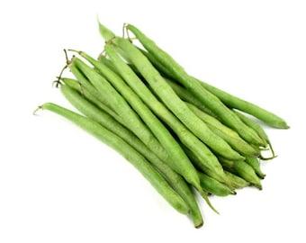 50 BURPEE STRINGLESS Green Pod BEAN French Phaseolus Vulgaris Vegetable Seeds