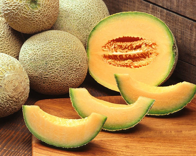 200 HALE'S Best JUMBO CANTALOUPE Orange Muskmelon Cucumis Melo Melon Fruit Seeds