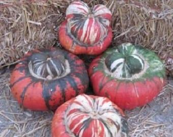 10 American TURKS TURBAN SQUASH Gourd Cucurbita Maxima Vine Seeds