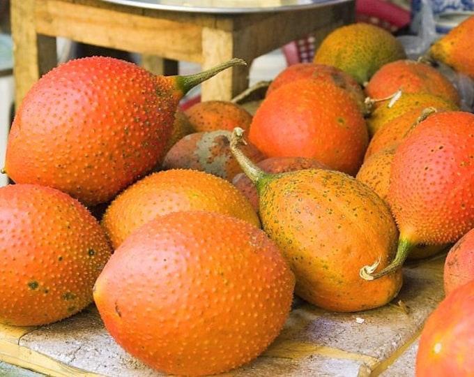 2 GAC FRUIT Gac Melon Vine Momordica Cochinchinensis Seeds