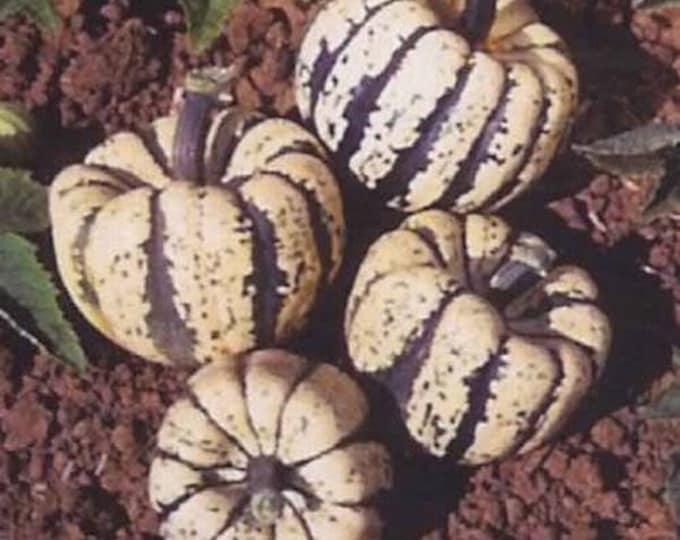 15 HEART Of GOLD Acorn SQUASH Winter Cucurbita Pepo Vegetable Seeds